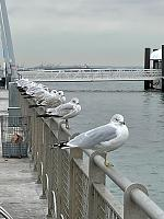 Click image for larger version.  Name:Gulls at Owls Head.jpg Views:91 Size:89.4 KB ID:22165