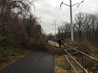 Click image for larger version.  Name:tree down 1.jpg Views:91 Size:96.6 KB ID:20537
