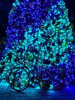 Click image for larger version.  Name:tree lights.jpg Views:80 Size:102.0 KB ID:23040